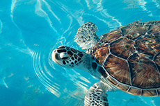 Isla Mujeres Turtle Farm photo Dolanh